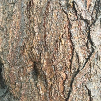 Bark Close up Tree Texture