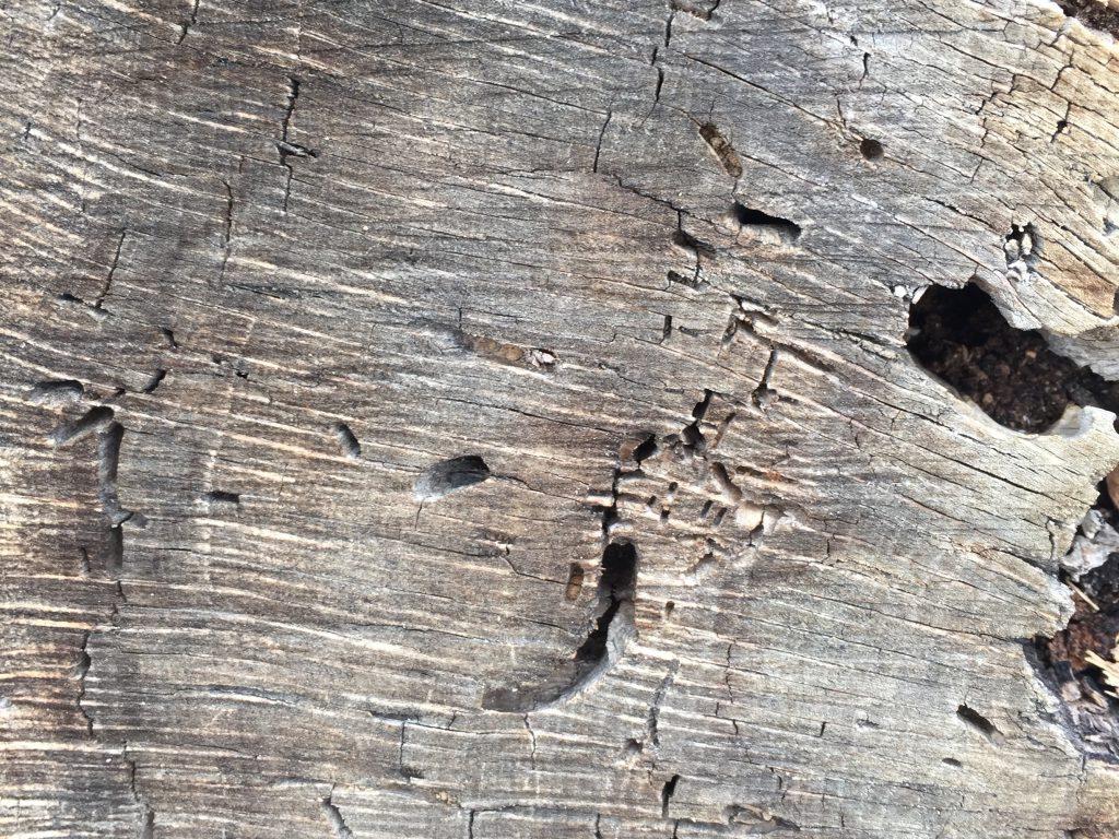 Dead Tree Texture Stock