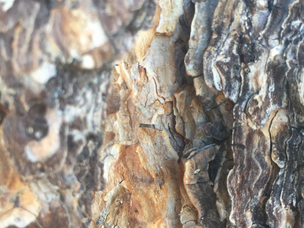 Tree Bark with DOF Texture