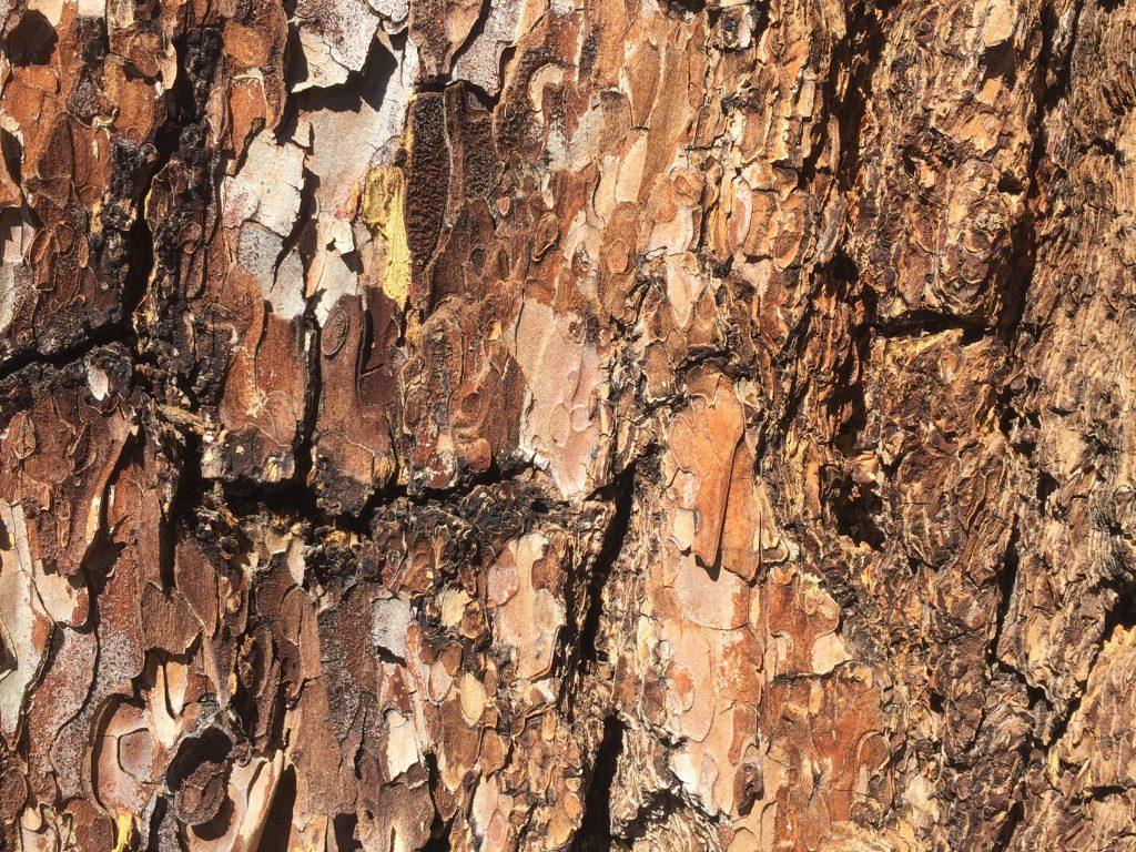 Tree Bark Texture Close Up
