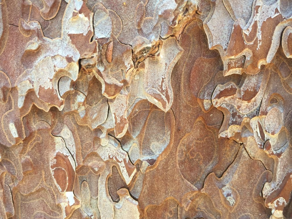 Paper Like Wood Bark Texture
