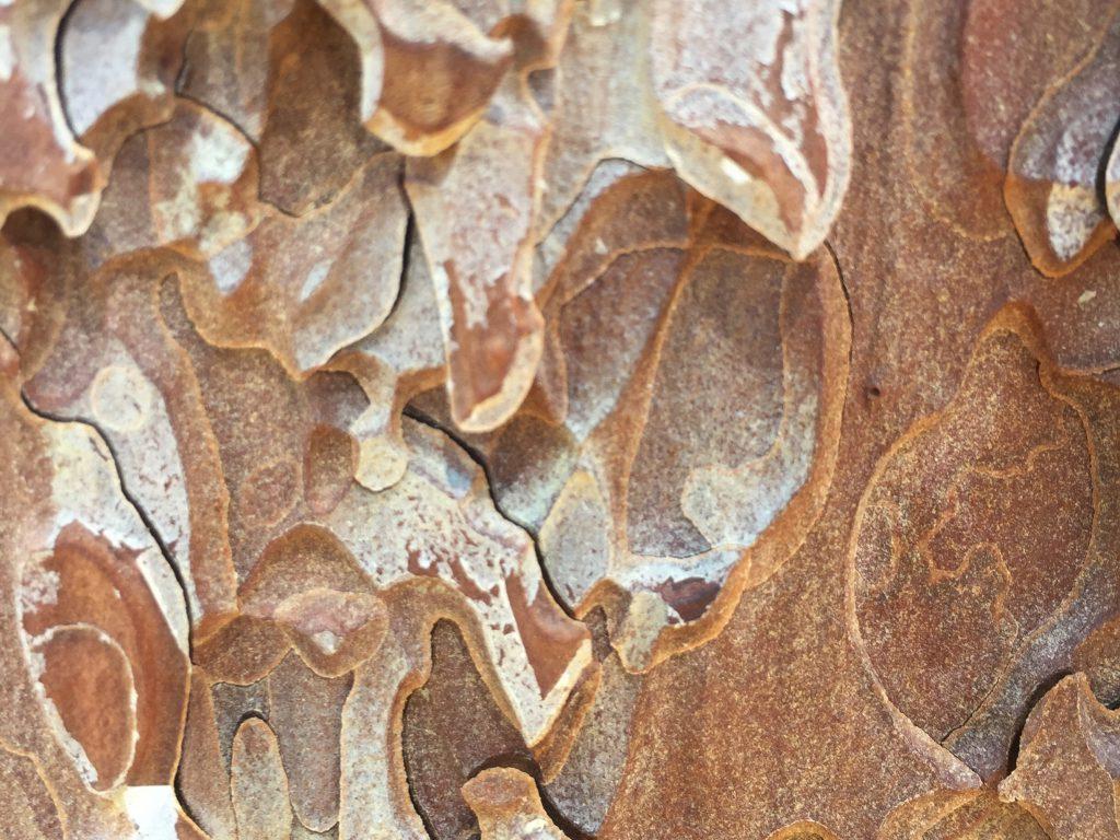 Flakey Bark Tree Texture