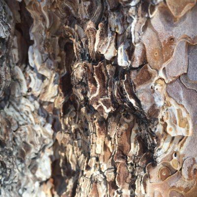Bark Texture Close Up Texture