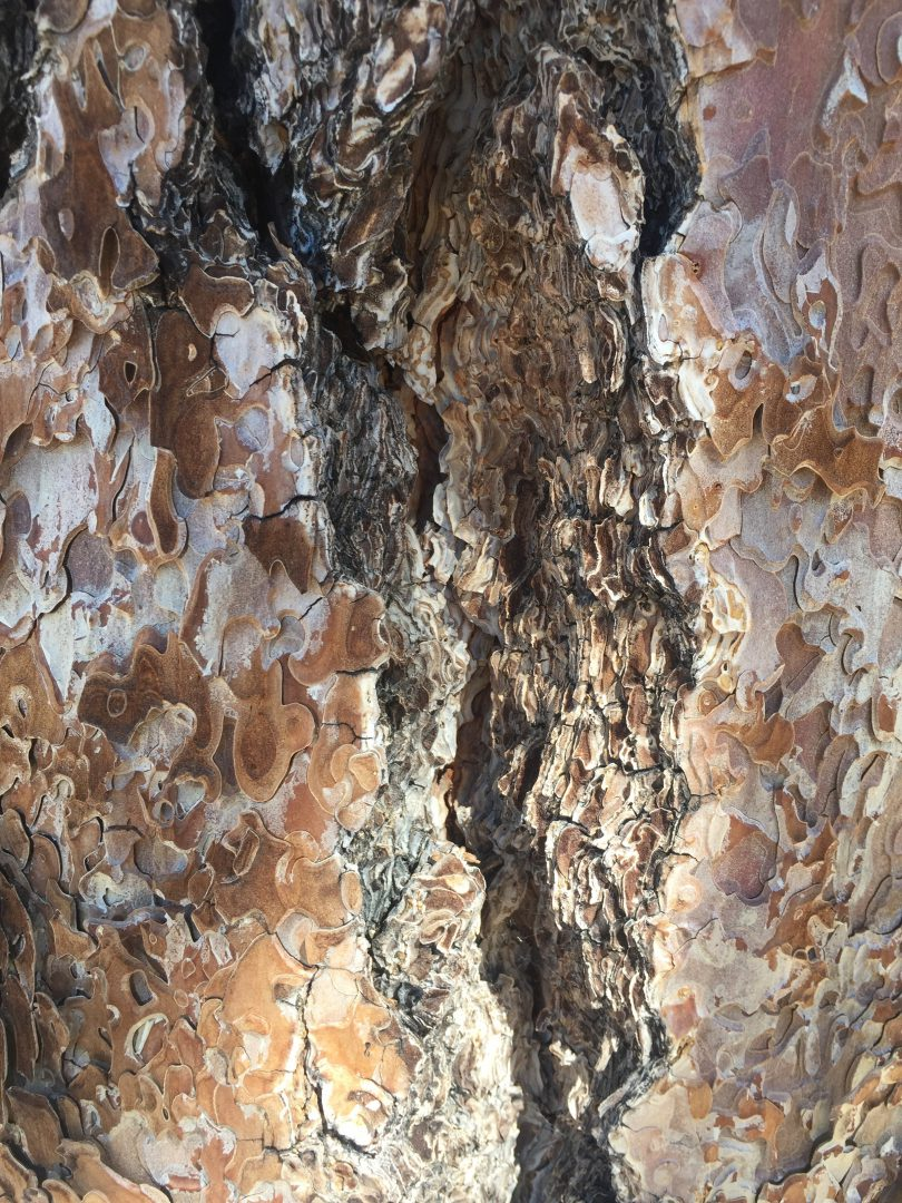 Colorful layers of Tree Bark Close Up | Free Textures