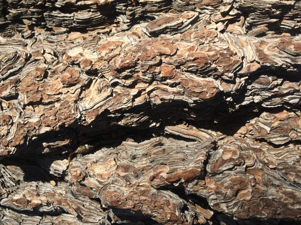 Tree Bark Close Up Texture