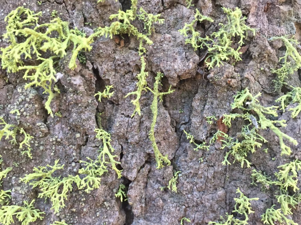 Tree Bark with Moss Growing