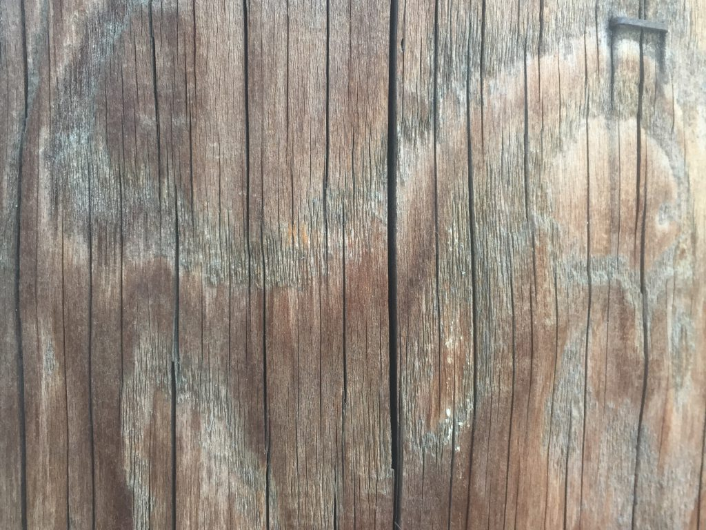 Wood Telephone Pole Texture