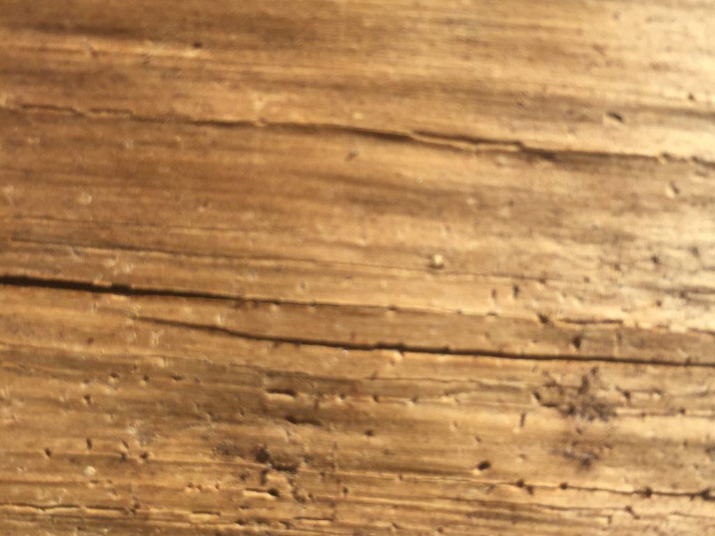 Dead wood grain with depth of field