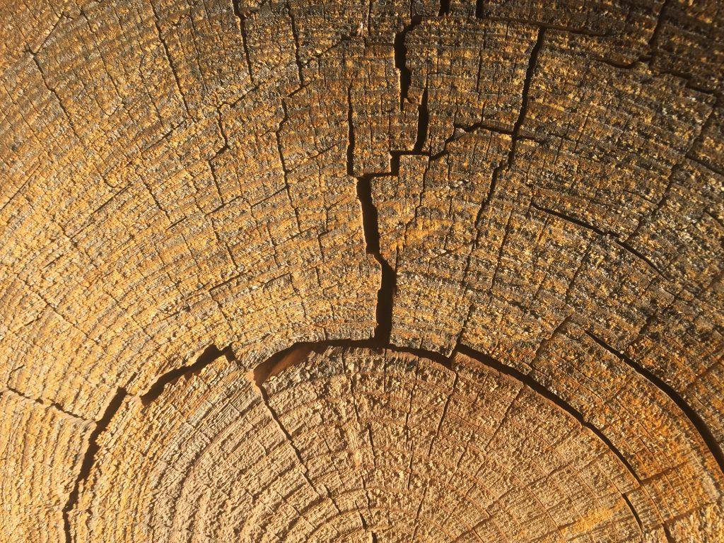 Stock Tree Ring Photo