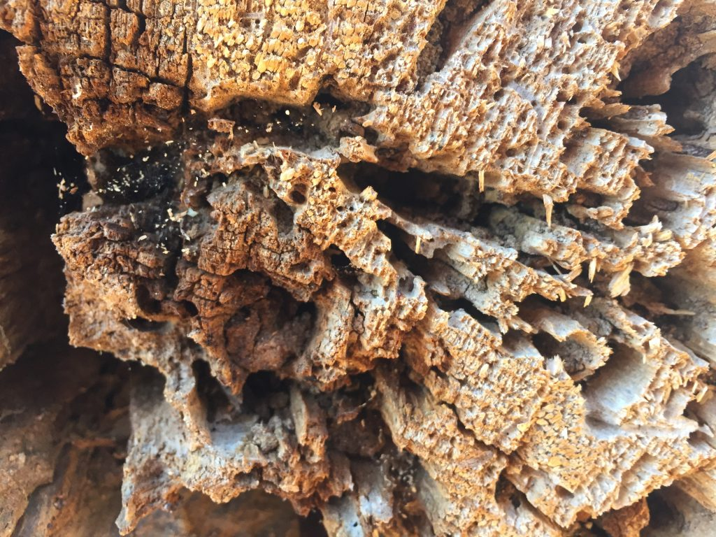Close up of dead wood in forest