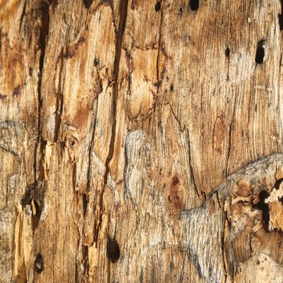 Close up of dead tree wood grain stock texture