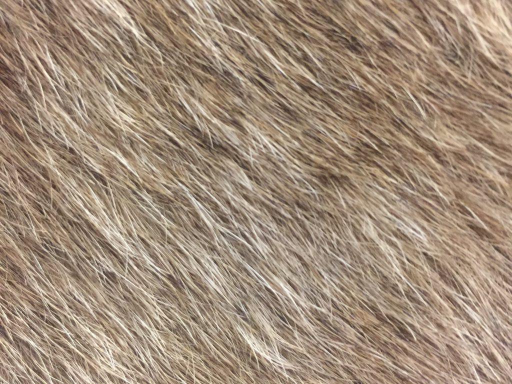 Hairy animal skin texture
