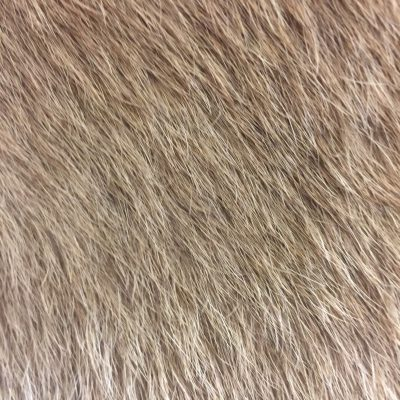 Light brown hairy animal skin texture