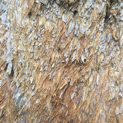 Hairy bark of a light brown/red sequoia tree