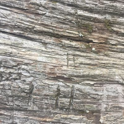 Dead tree grain running horizontally with marks throughout