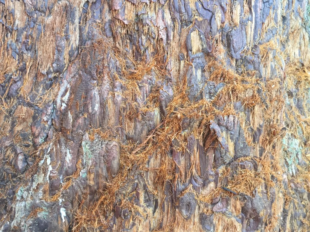 Sequoia tree texture featuring light brown and black spots