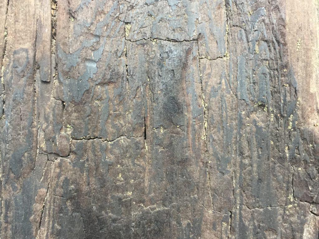 Blotchy tree trunk with cracks running vertically