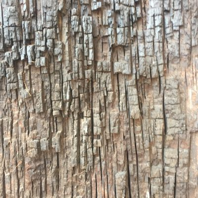 Chiseled lines of tree bark running vertically