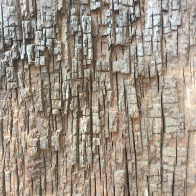 Chiseled lines of tree bark running vertically