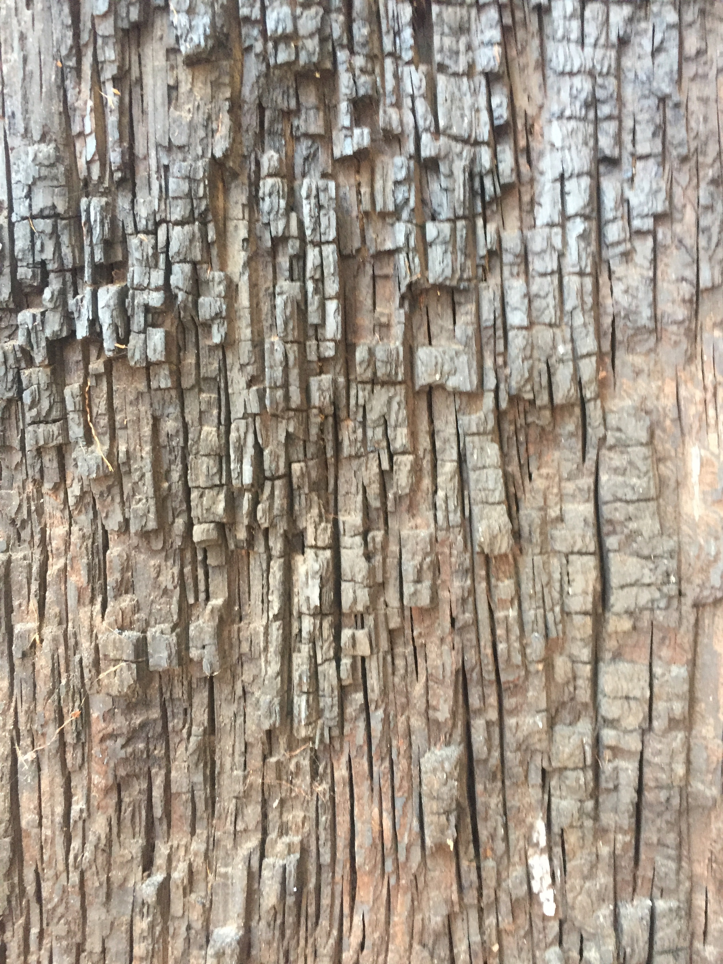 Chiseled lines of bark running vertically | Free Textures