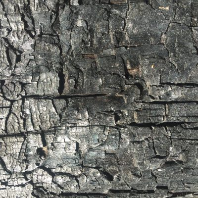 Charred tree from forest fire texture