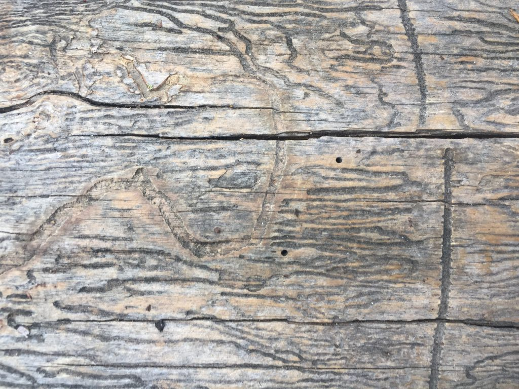 Light brown and grey dead tree wood with horizontal cracks