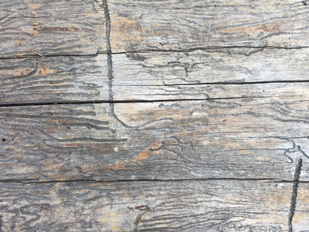 Dead log with horizontal cracks and shallow serpentine lines