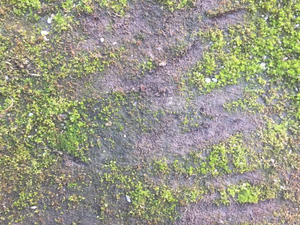 Bright green moss growing on dark brown dirt