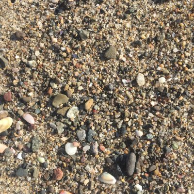 Sea shells and pebbles over granular sand
