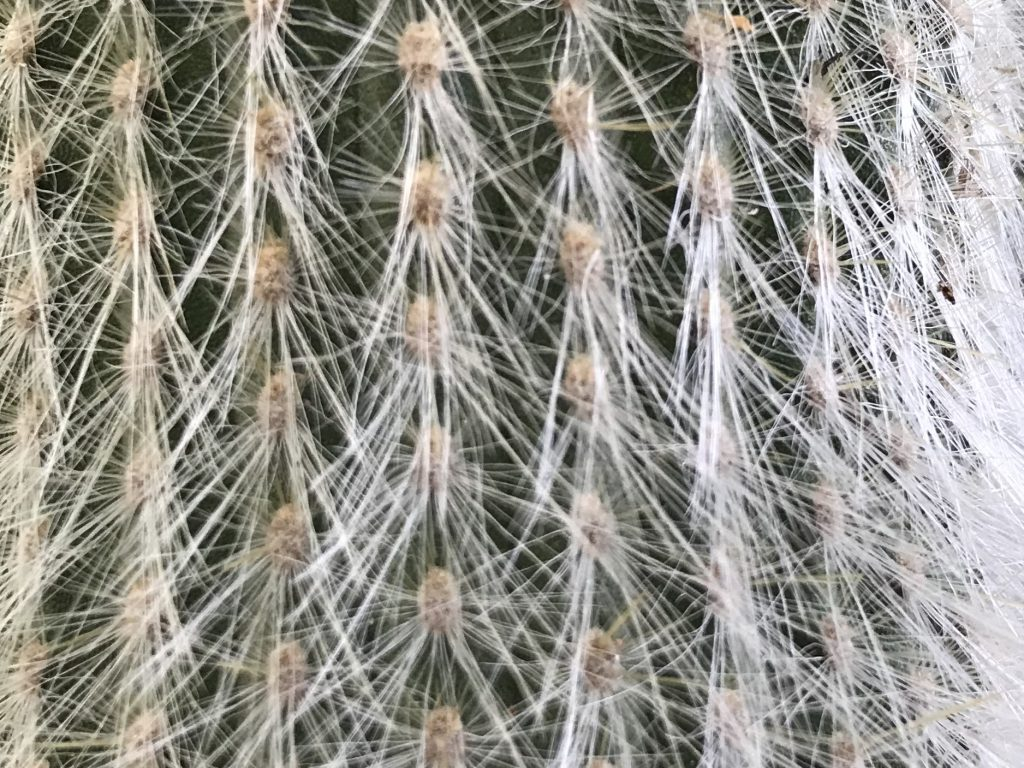 White cactus barbs over dark green cactus base