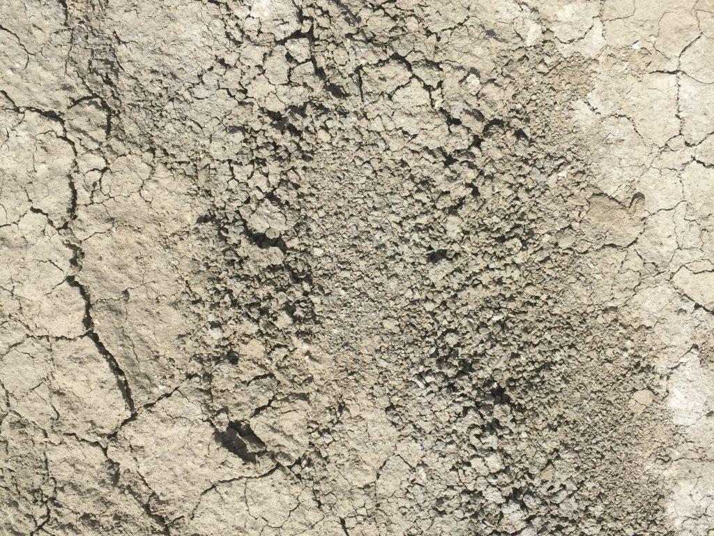 Dried mud with cracks