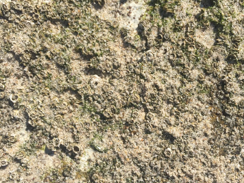 Tan sandy grains with green moss