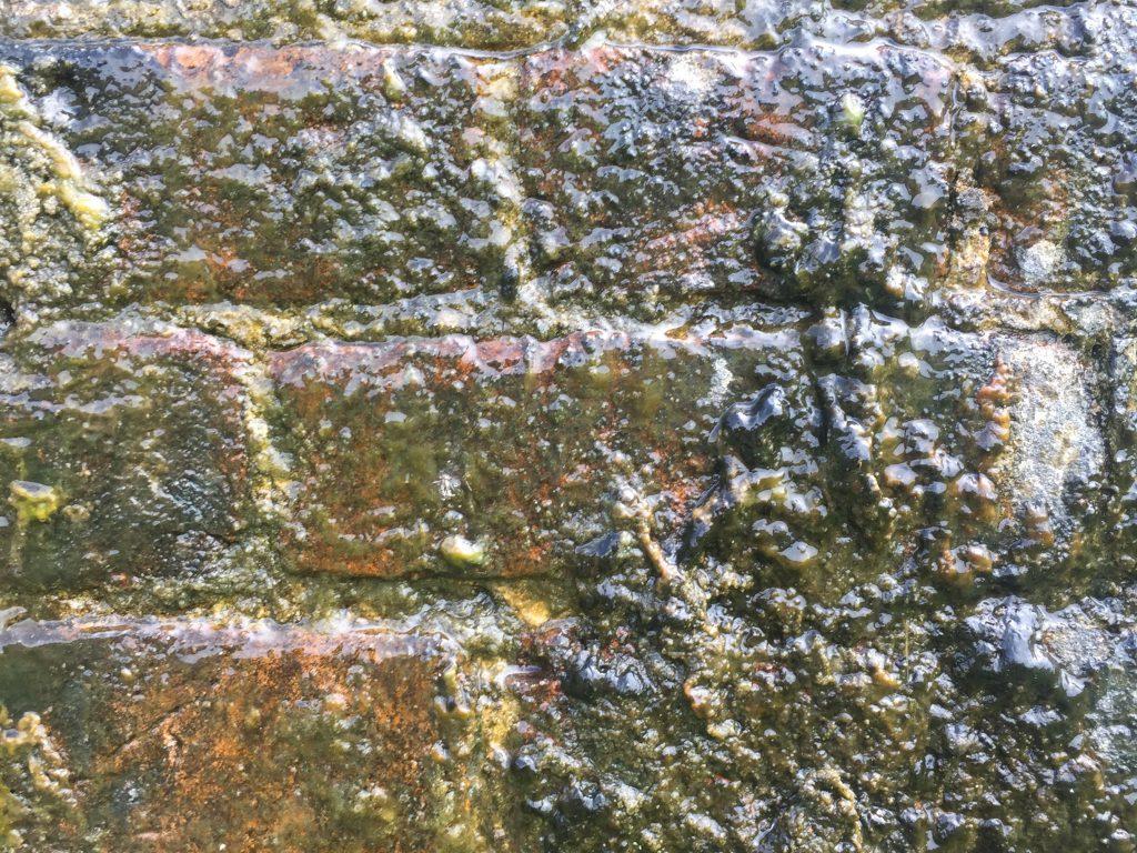 Detailed shot of moss on bricks
