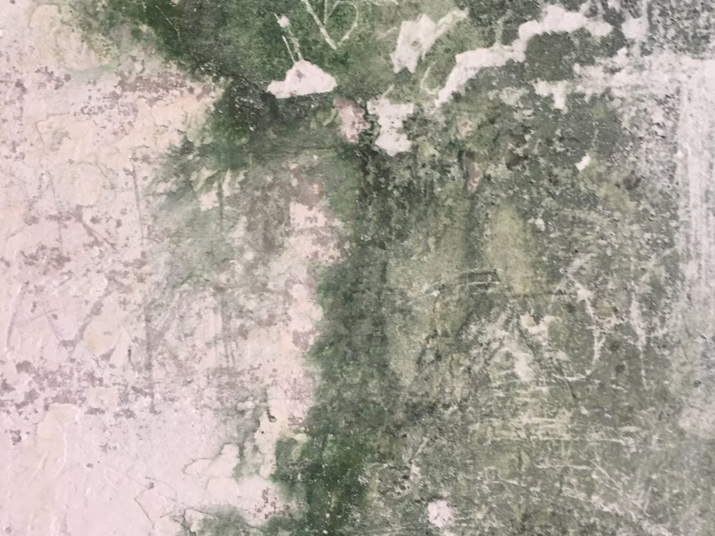 Layers of bad pink paint with mold over top