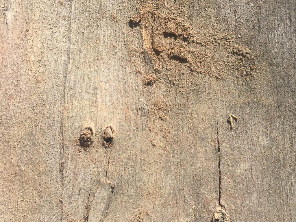 Light brown flat wood grain texture