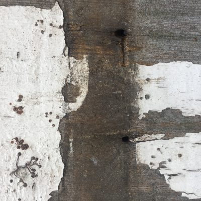 Layers of dried white over dead wood