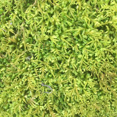 Bright green fern close up