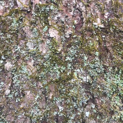 Tree bark with moss and mold growing
