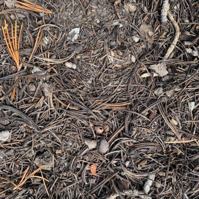Pine needles and debris covering ground