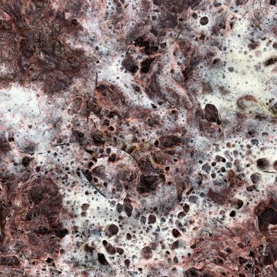 Wet crimson moss with sea foam