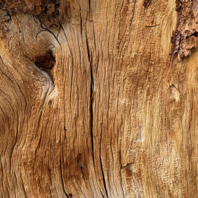 Log bisected close up showing good grain and cracks