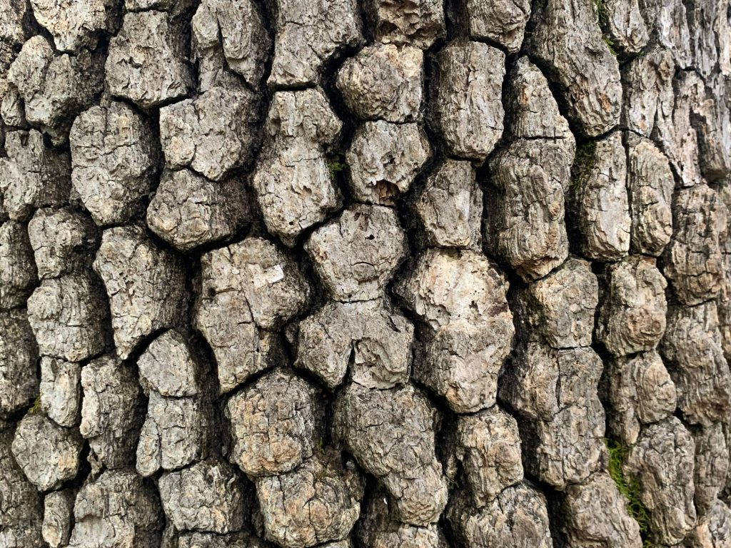 Tree bark with deep groves and cracks with light brown surface