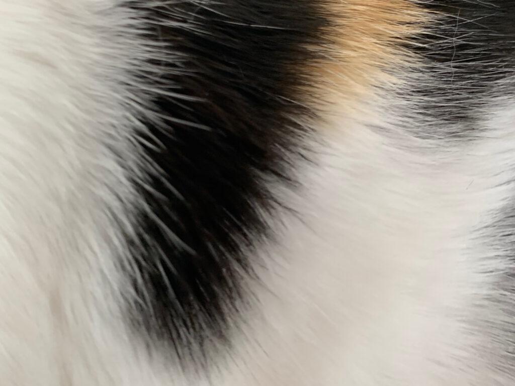 Calico cat fur close up