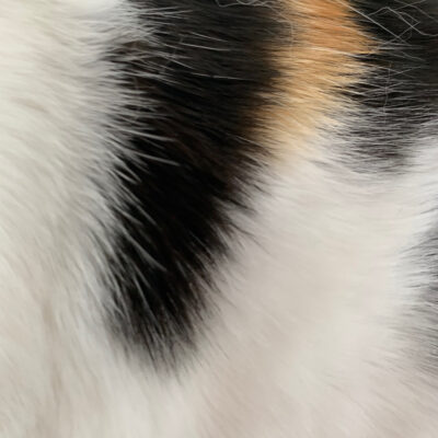 Calico cat fur close up