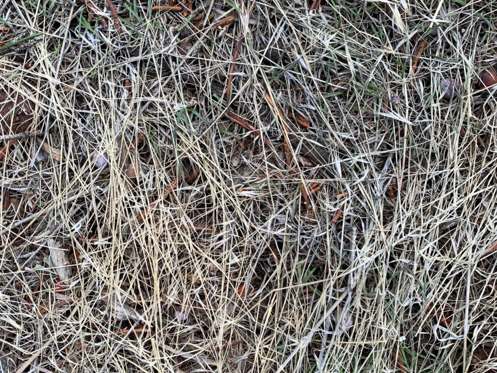 Thin dead white/dead brush covering ground