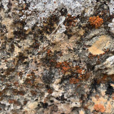 Colorful rocky surface with layers of moss/mold