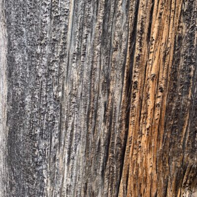 Tree bark closeup with coarse texture brown and gray coloring