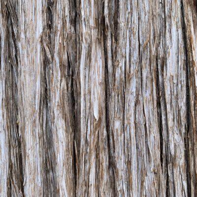 Gray and brown tree bark