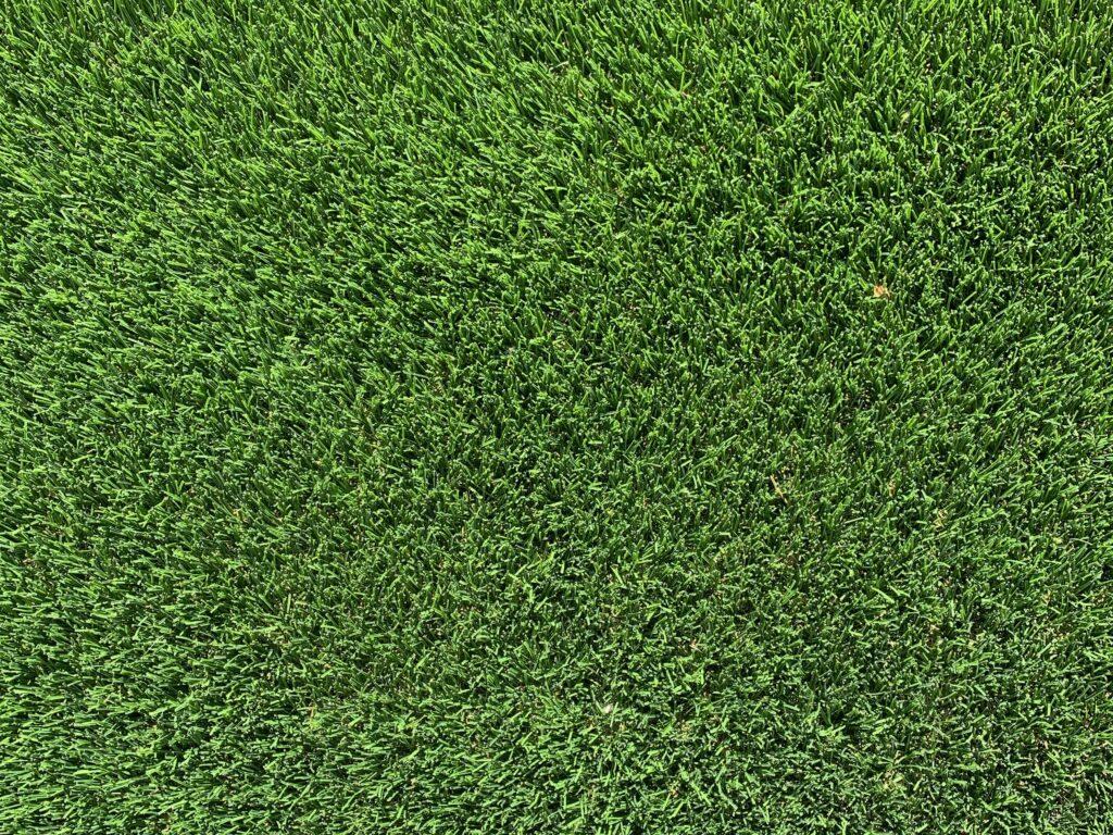 Close up of short green grass