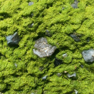 Vibrant green moss growing on bed of rocks